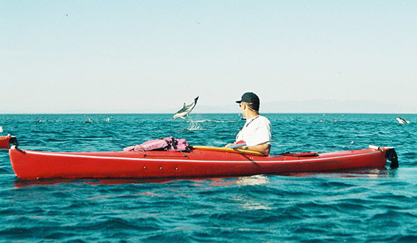 kayaking with dolphin