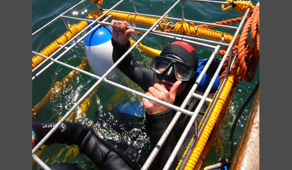 Person in Shark Cage diving cage