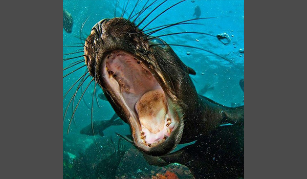 seal opening mouth