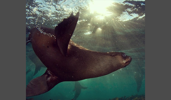 seal from below